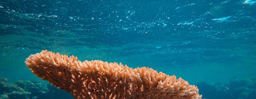 3D štampani bionički korali, koji podržavaju rast mikroalgi