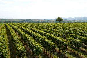 Precizno vinogradarstvo