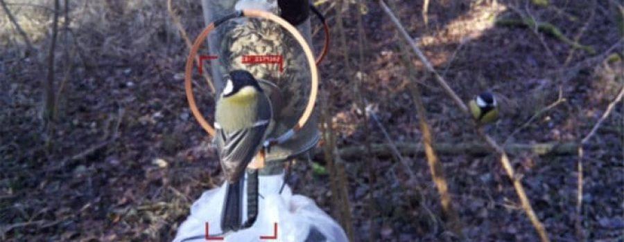 Alat vještačke inteligencije za raspoznavanje jedinki ptica