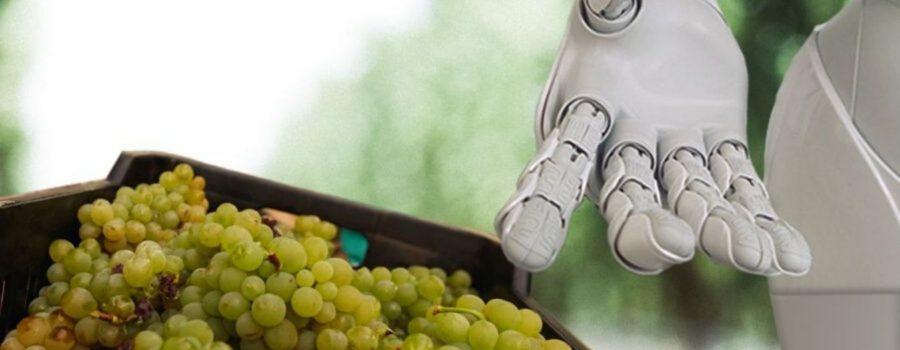 Kako će vještačka inteligencija revolucionirati budućnost vina