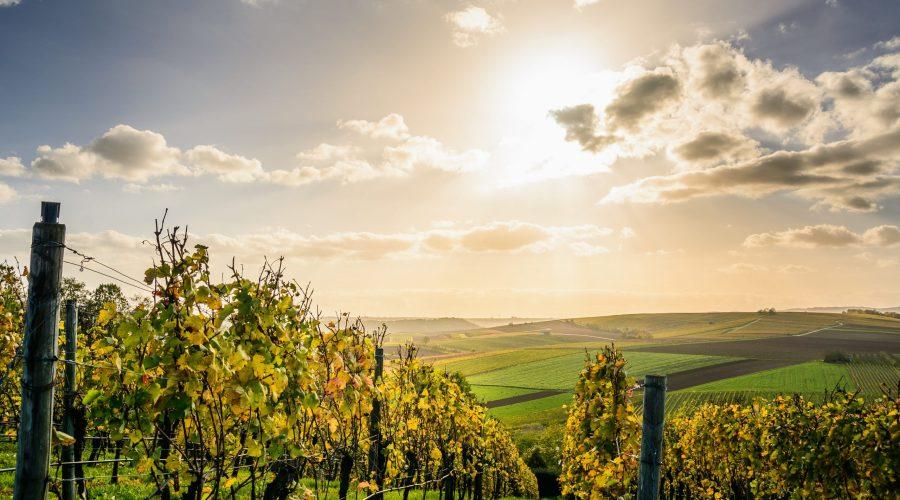 Deset najboljih softvera za upravljanje vinogradima