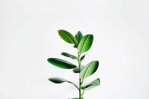 Atomska struktura koja je odgovorna za disanje biljaka