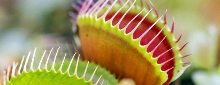 Novi uređaj koji može da komunicira sa biljkama